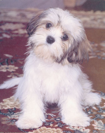 2773fluffy-the-puppy-posters.jpg